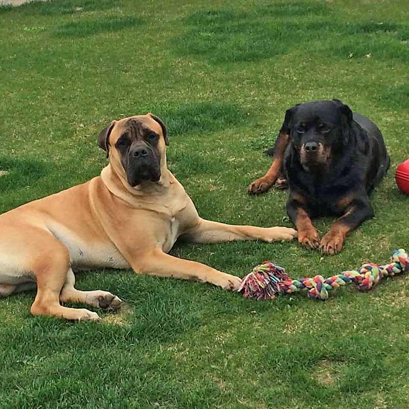 """Bewertung von Petty's tierischem Feinkostladen. Die Hunde Blue und Bond sind der Meinung: """"WOW!"""""""