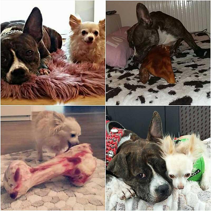 """Bewertung von Petty's tierischem Feinkostladen. Die Hunde Buffy und Stitchy bellen ein deutliches: """"WOW!"""""""