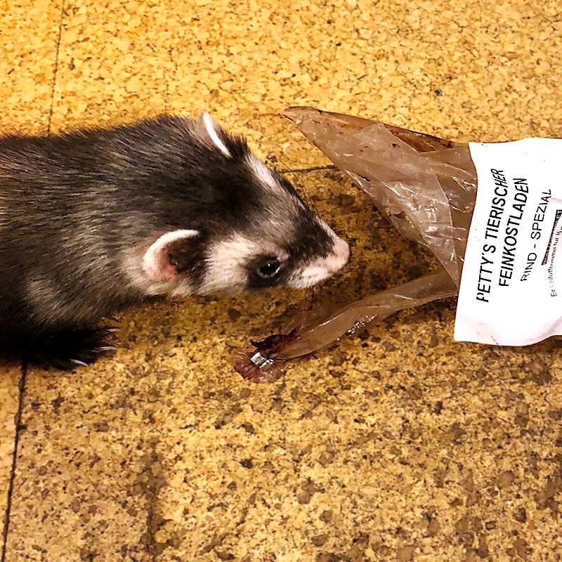 Bewertung von Petty's tierischem Feinkostladen. Dem Frettchen schmeckt es!